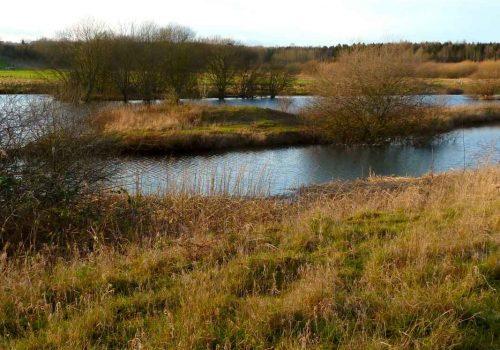 Marfield_Wetlands_Nature_Reserve